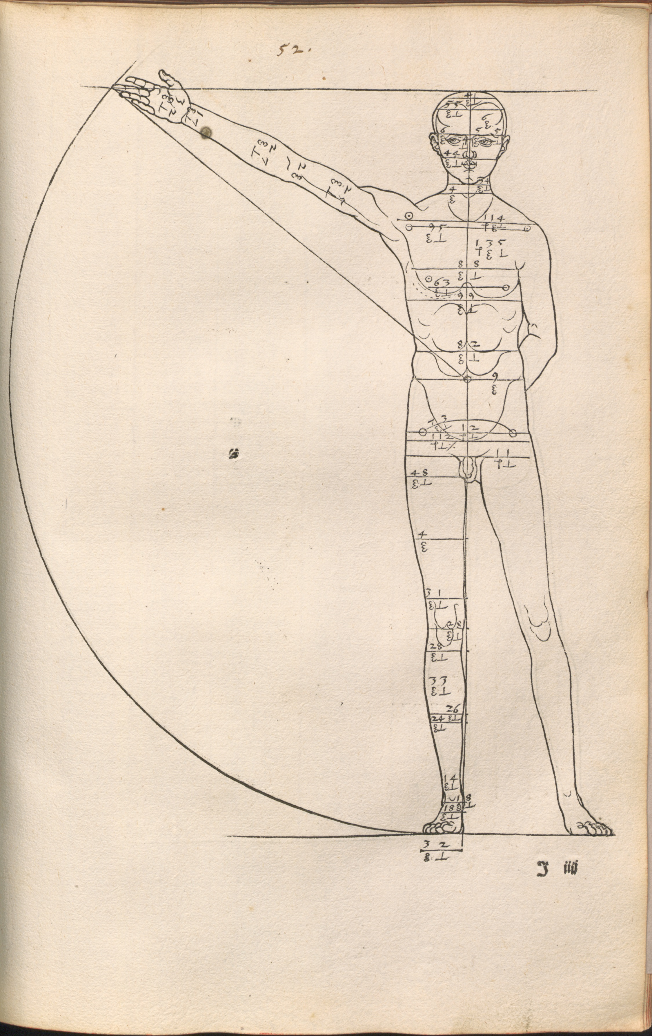 Durer proportions 1528.jpg