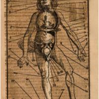 phrysen anatomy.png