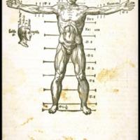 Barbaro Proportions 1568.jpg