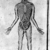 pseudo-galen anatomia.jpg